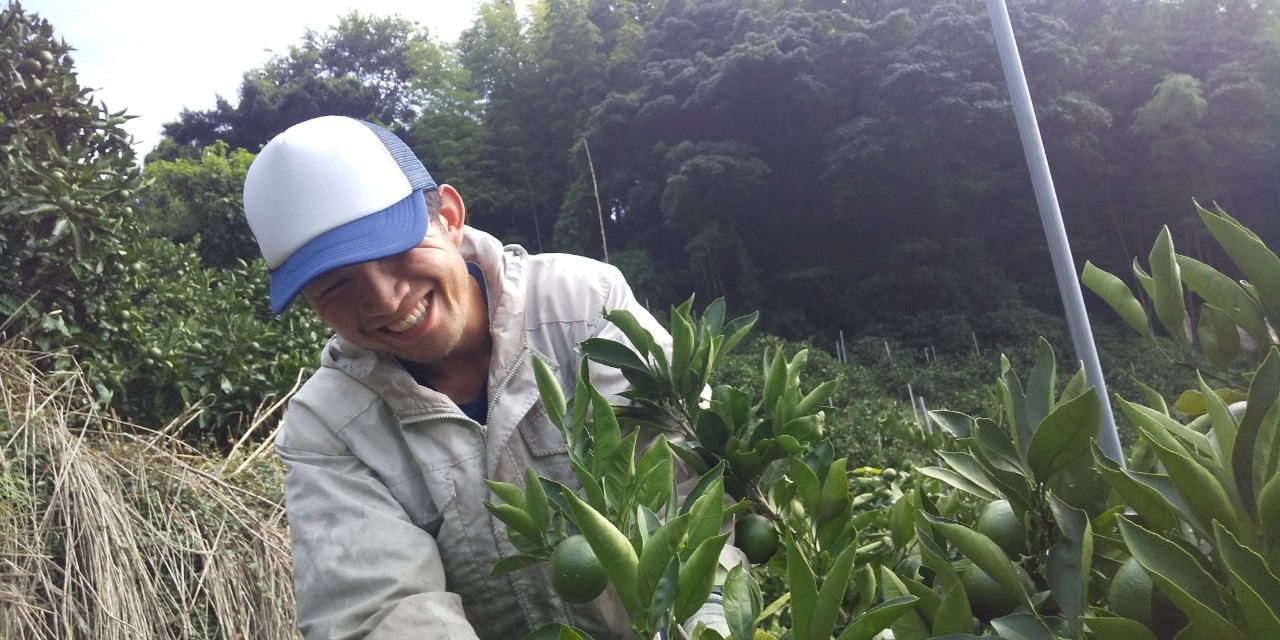 みかんの摘果をする太田くん