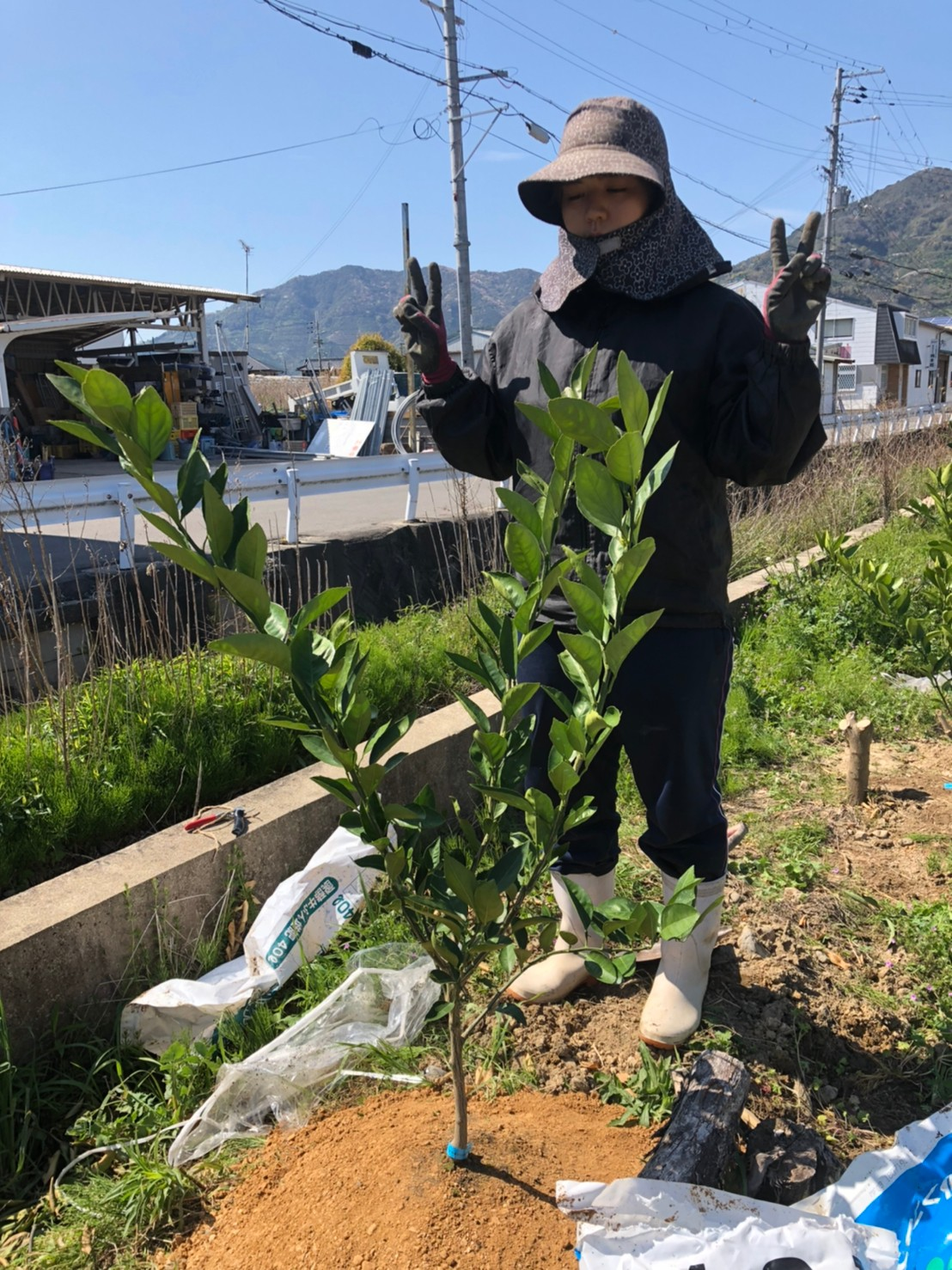 苗木を植え終わりました