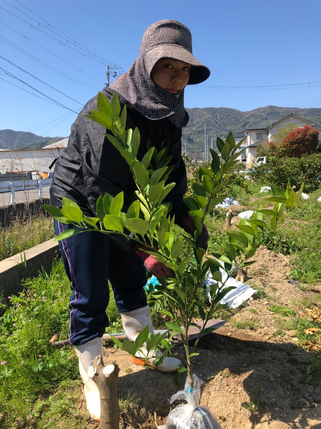 みかんの苗木を植える位置を決めます