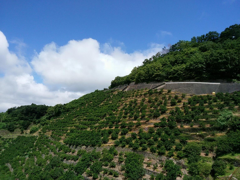 早和果樹園の畑新林