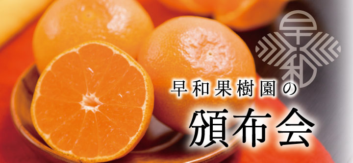 有田みかんが気になった方はこちら♪ 早和果樹園の商品を毎月1回お届けします